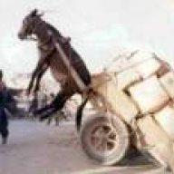 Hand Truckin Mule