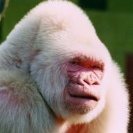 Snark Monkey